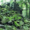 カンボジアに行ってきた 〜 ラピュタのモデルになったと言われているベンメリア遺跡へ 〜