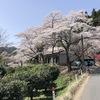お仕事も桜咲く!!