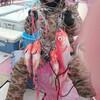 新島沖のブランドキンメ釣り🎣