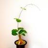 千葉の植物屋さん