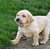 子犬を小さくしたい・大きくしたくないからドッグフードを少なくするのはアリ?