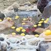 伊豆シャボテン公園でカピバラのお風呂を見てきたよ / 伊豆・伊東旅行記3