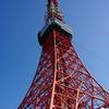 開花直前! 東京タワー周辺サクラ情報
