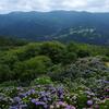 【秩父】蓑山 花の名山、アジサイ咲く美の山