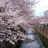 3月23日(金)火曜日の成田に続き羽田での取材と、新たな酒場での日常。