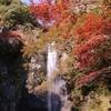 大阪府の紅葉情報。箕面がアツい。紅葉写真多め!見頃は12月中旬までか?