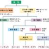 樹木の分岐構造と、外理と内理。