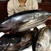 鹿児島枕崎からお魚さん到着!
