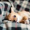 【中小企業診断士】不眠と体調不良に苦悶の勉強46~52日目