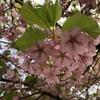 縮景園、春がどんどん来ています。