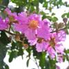 花の溢れる首都ハノイ。