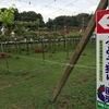 千葉県松戸市・鎌ケ谷市でぶどう狩り!おすすめぶどう園!加藤ぶどう園・小川園は都心・駅から近い!