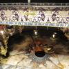 イエス・キリスト生誕の地「ベツレヘム」