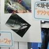 釣具店に貼られてたのも…ほんの一瞬(笑)九頭竜川サクラマス・スプーン