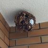 浜松市でベランダにできたスズメバチの巣を駆除してきました!