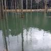 朽木渓流魚センター釣行 4月24日 その2 特大イトウ釣れました!