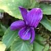 春には少ない紫色♪