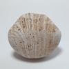 現代アート  石「やがて 見る」 Contemporary Art vol.58