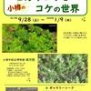 [植物展]★小樽のヒカリゴケとコケの世界展