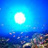 ♪慶良間でドリフトダイビングは魚影が濃い♪〜沖縄ダイビング慶良間〜