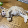 保護猫の呼び名はコタローにしました!