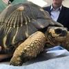 ペットや食用で犠牲になっている絶滅危惧種「ホウシャガメ」の実態