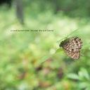butterflytakaji's blog