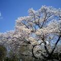 くじら公園で子供とお花見を楽しんできました!