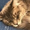 【猫たちの一日に密着!】結局ずっと寝てる!?