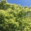 雑木がつくる風景