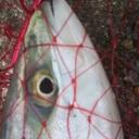 阪神間の冴えない釣り日記