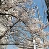 「4年目の秋」ならぬ春