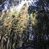 【旅行記】2017年2月韓国・2日目 全州(チョンジュ)から潭陽(タミャン)観光