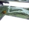 ロス・マゴリアの海底の裏側散歩②