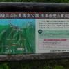 新潟県 浅草岳 と 美女、花々、たち