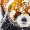 円山動物園を一人旅するしかねえな