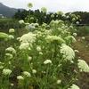 野菜の花🌼野菜の命