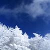 真冬の寒さを感じる霧氷を撮影しました
