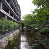 高瀬川の景色+鴨&自転車