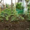 トマトの肥料効果を実験-その2