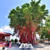 セキンチャンの願い事の木