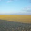 『草原の実験』