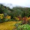 紅葉と霧の苗場山【百名山】祓川コース