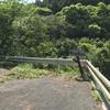 関の山・金石山・大山を歩く