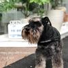 【お散歩】2018年台風12号