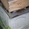 日本ミツバチの天敵現る ホバリングしながら Natural enemy for Japan bees appeared While hovering
