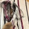 東京キャットガーディアンの飼育実態①(トップを走る譲渡数の裏に隠された大量死と繰り返される悲劇)