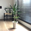 【インテリア】横浜みなとみらいのグリーン専門店で見つけた観葉植物。