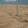 定年後に畑を整備して美味しいブドウを生産する