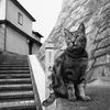記憶の旅猫・坂の街にて3。